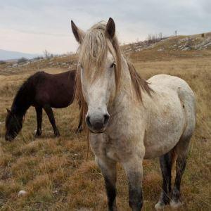 Omiljeno mjesto livanjskih divljih konja (VIDEO)