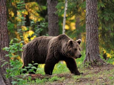 VIDEO: Medvjed snimljen u blizini naselja